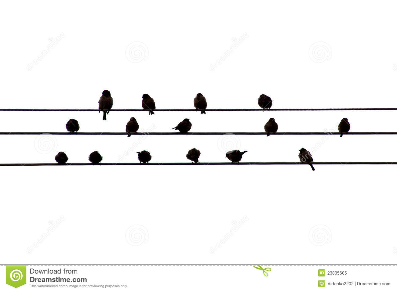 Birds on the wire stock image. Image of birds, aves, lines - 23805605