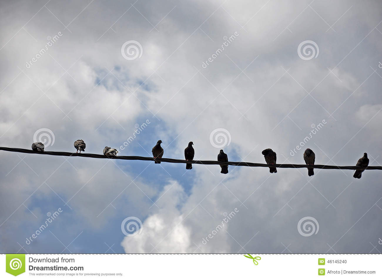 Birds on a wire stock photo. Image of spot, group, background - 46145240
