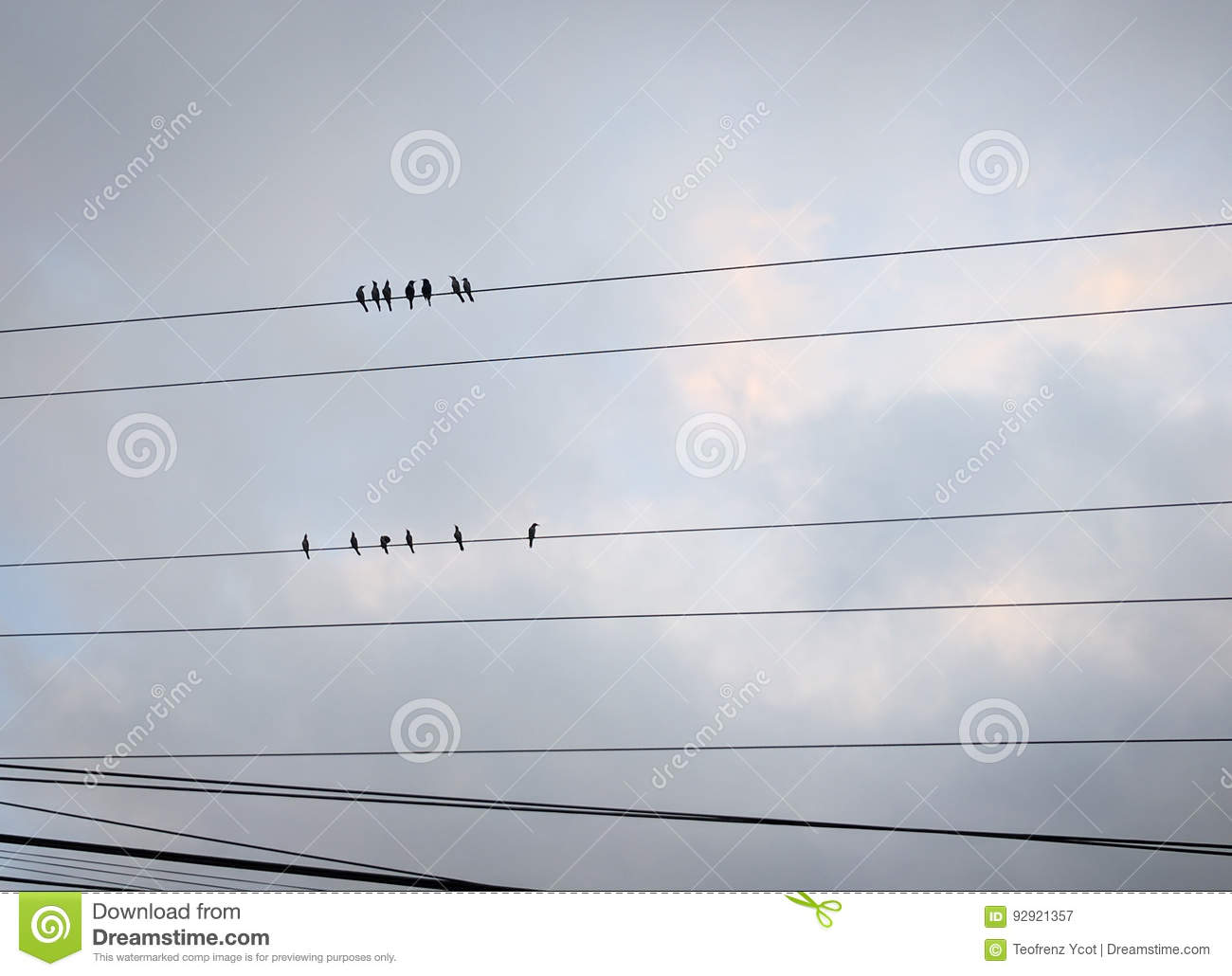 Birds on wire stock image. Image of live, perched, perching - 92921357