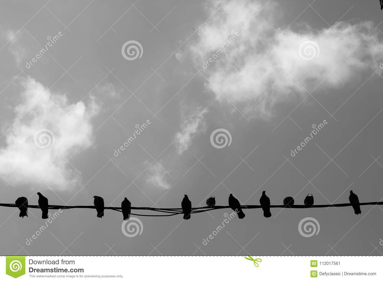 Birds on a Wire stock image. Image of blac, flying, isolated - 112017561