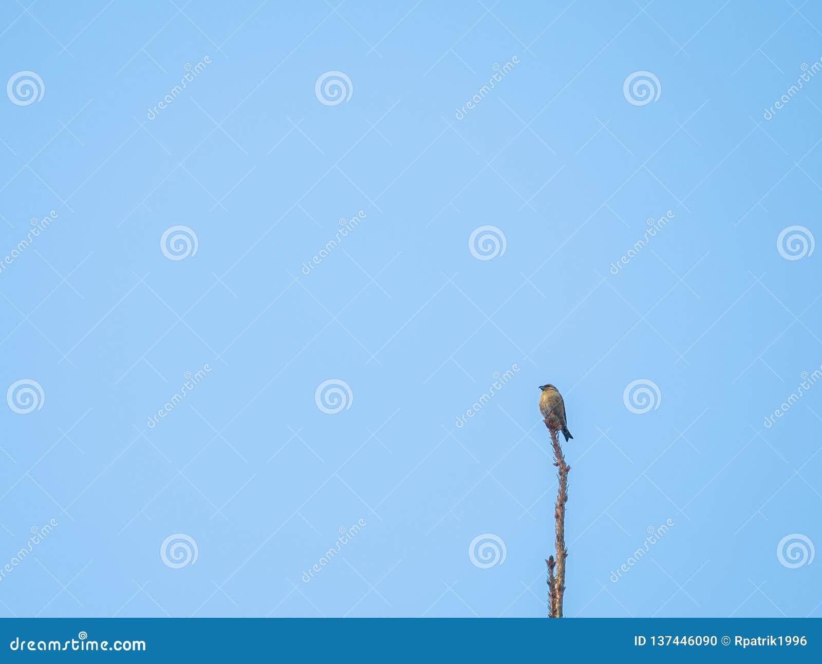 Birdwatch en el bosque negro