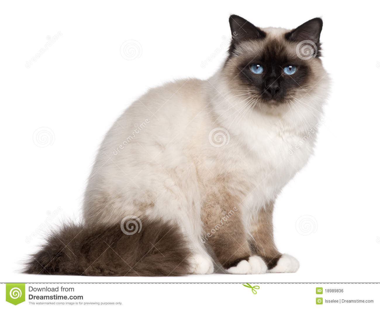 Royalty Free Image Old People Cat
