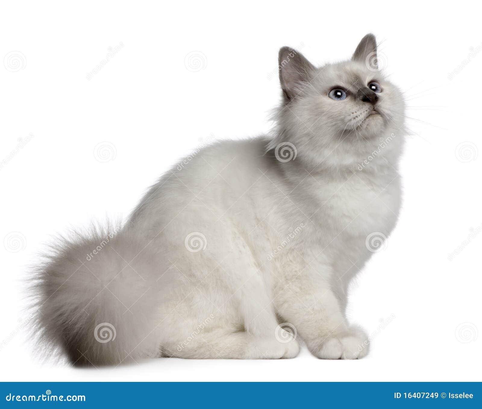 pandora cat charm