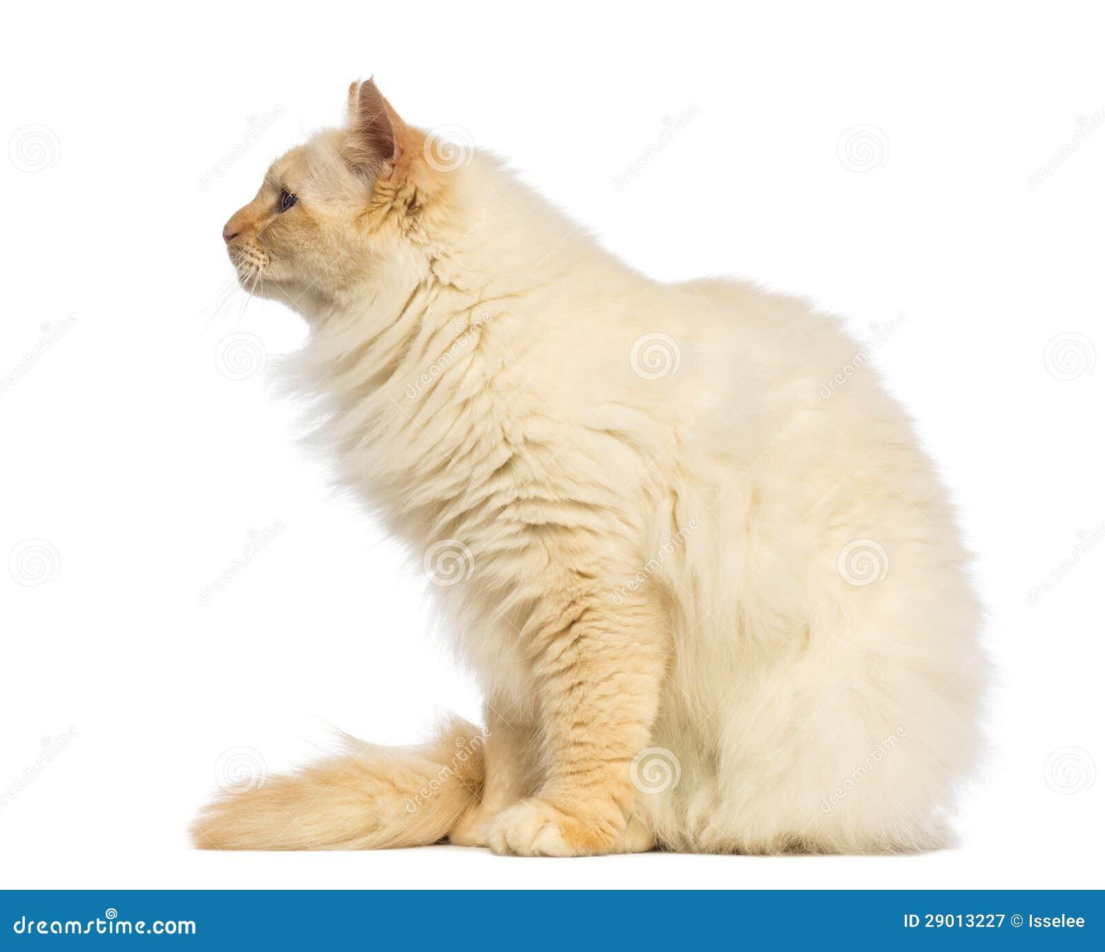 Cat Sitting Back Side