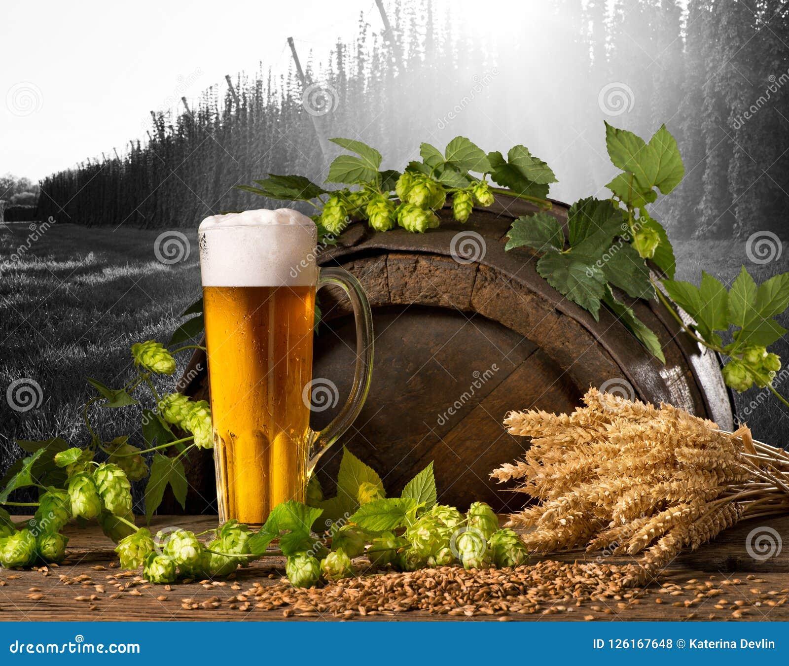 Birra, luppolo e grano