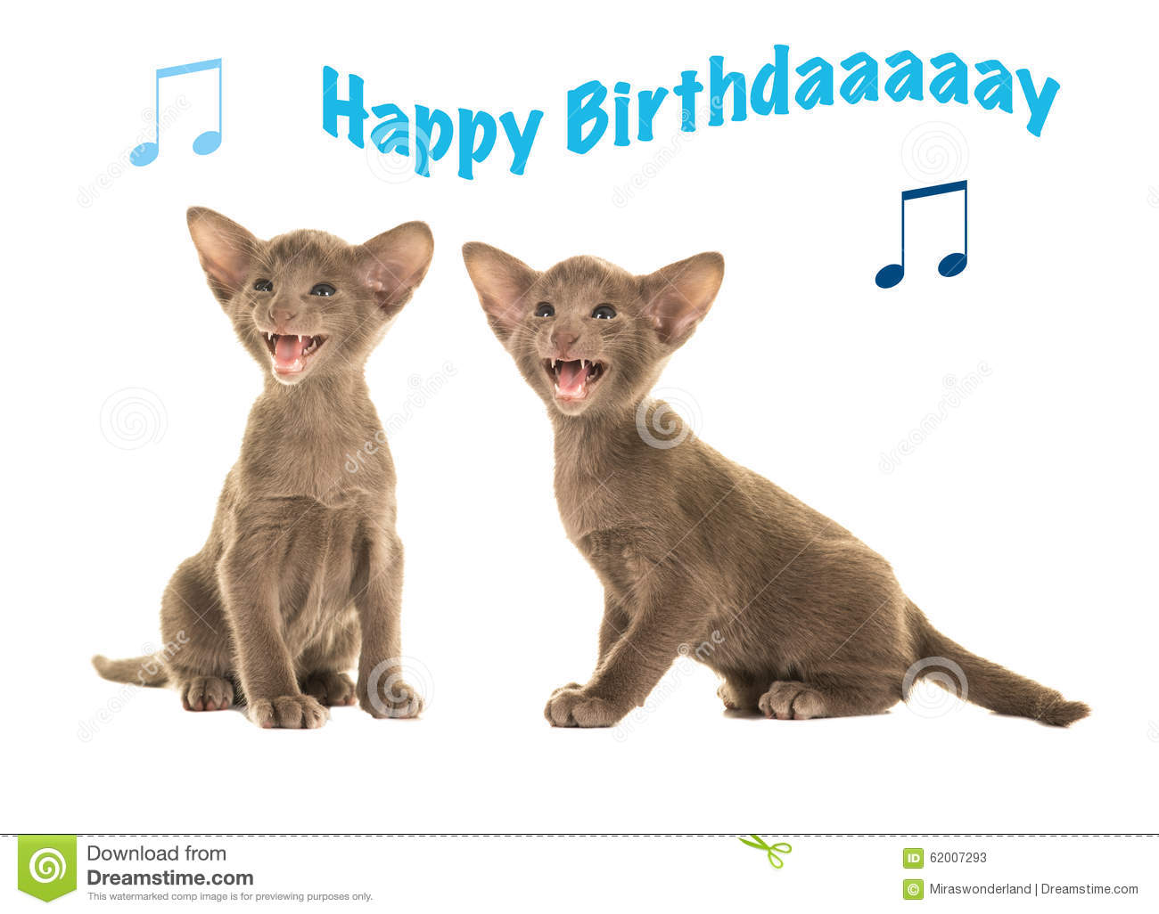 birthday card with siamese baby cats singing happy birthday stock, Birthday card