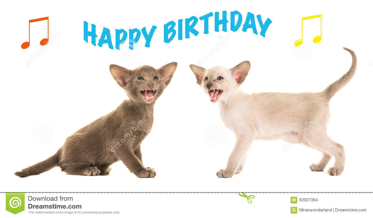 Birthday Card With Siamese Baby Cats Singing Happy