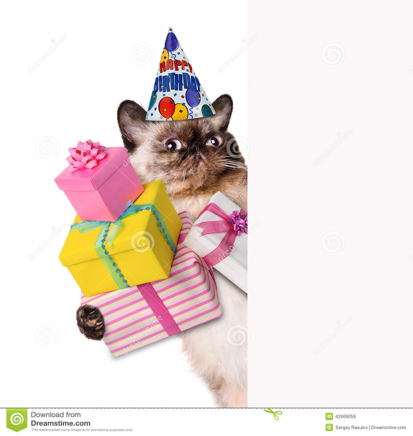 Cat Birthday Banner: Birthday Cat . Stock Image. Image Of Baby, Kitten, Gift