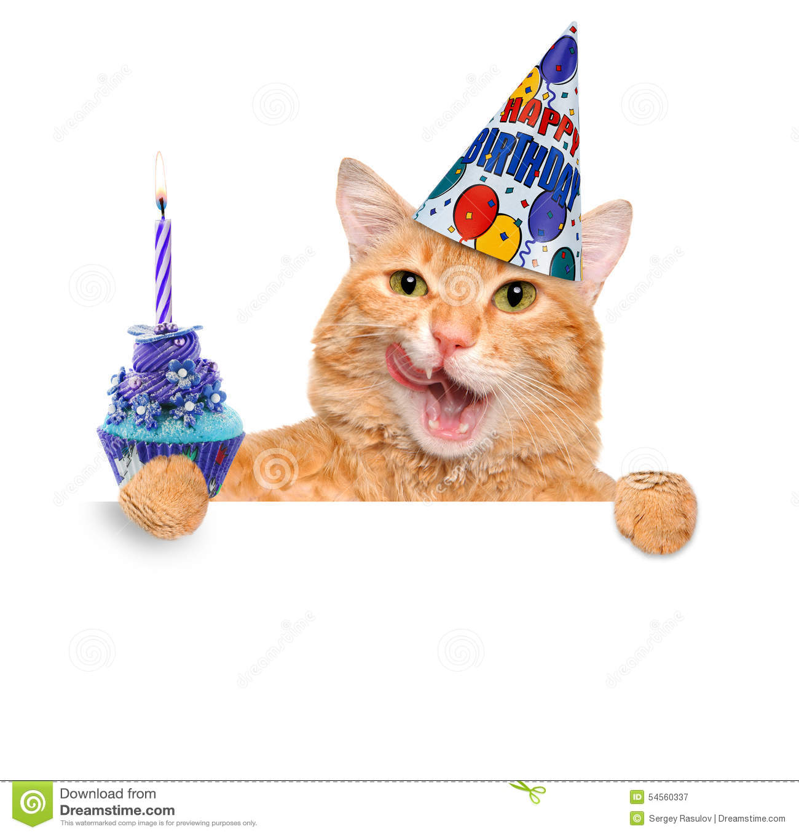Cat Birthday Banner: Birthday Cat . Stock Photo