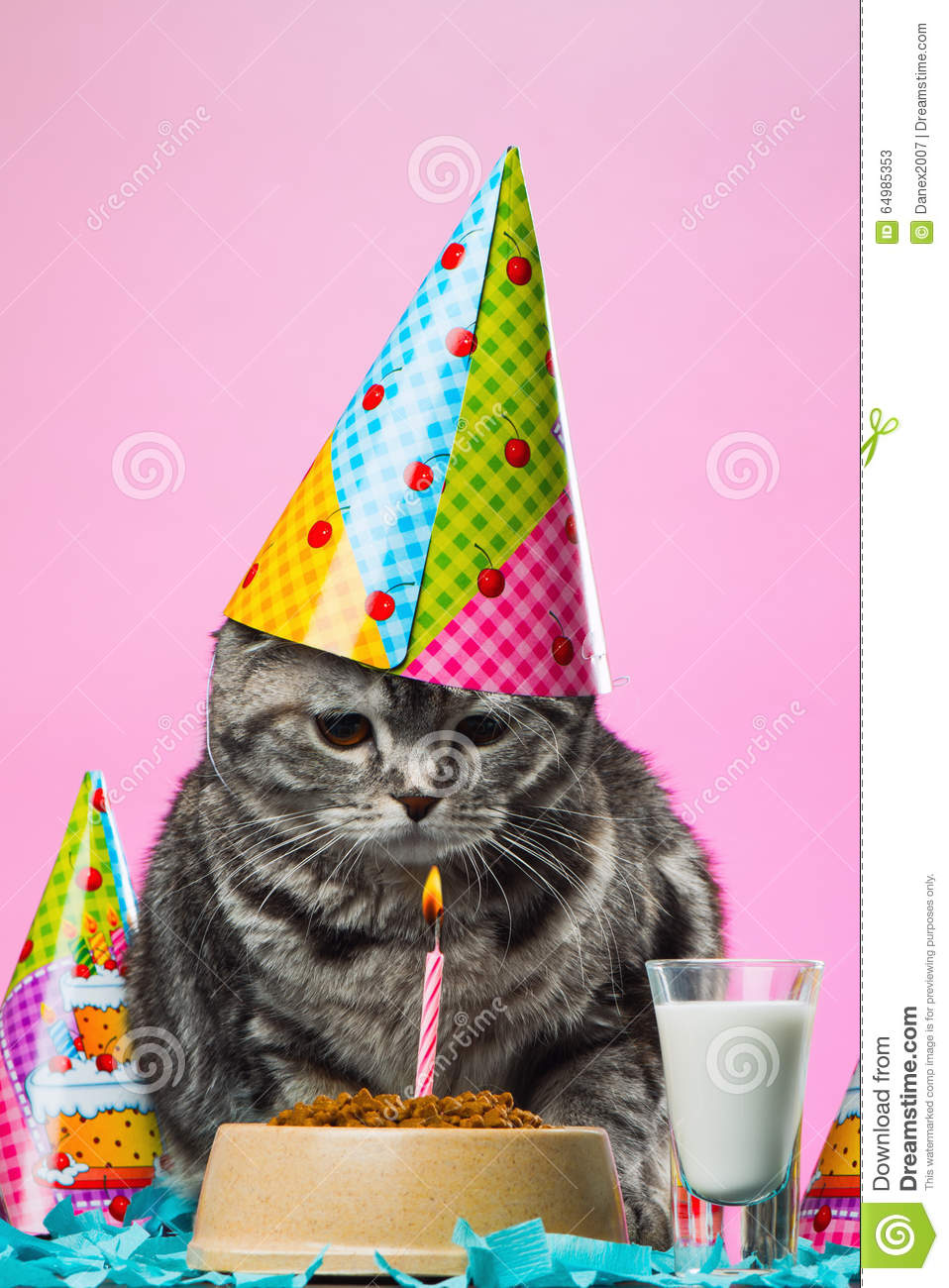 Birthday Cats Stock Image Image Of Kitty Background