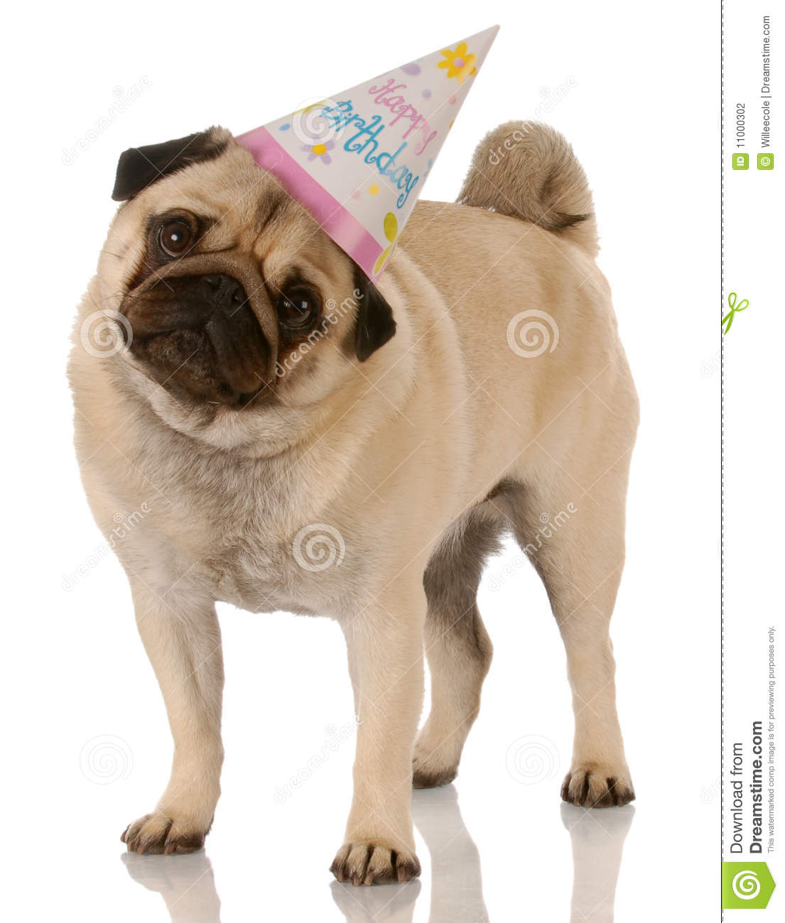 Birthday Images That Are Free Of Dog Wearing Sun Glasses