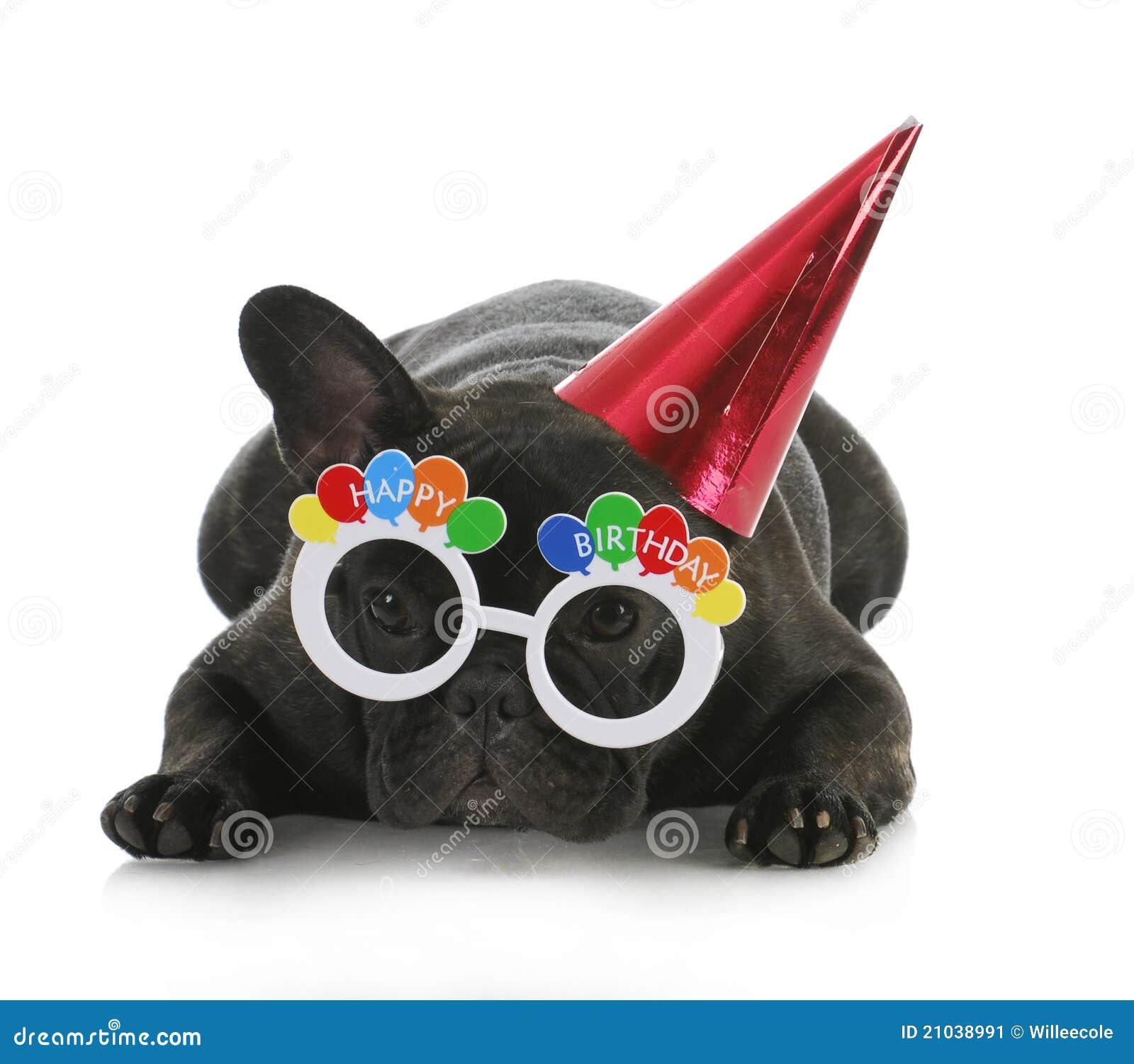 Birthday dog - french bulldog wearing happy birthday glasses and hat ...