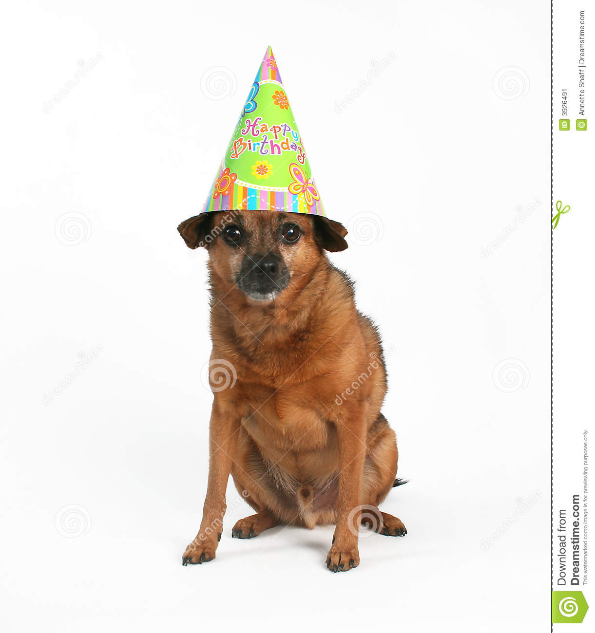 A Dog Sitting With Birthday Hat On