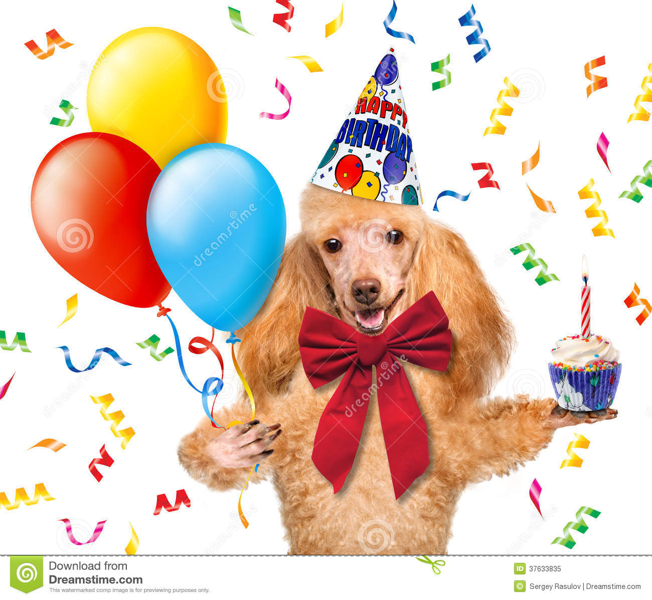 Birthday Dog With Balloons And A Cupcake Royalty Free
