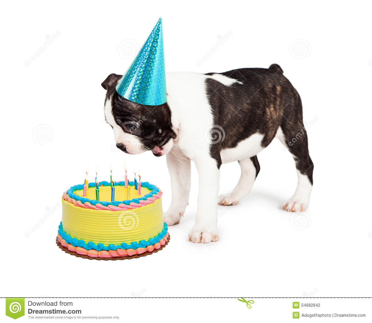 Birthday Dog Blowing Out Candles Stock Photo Image Of High Cake