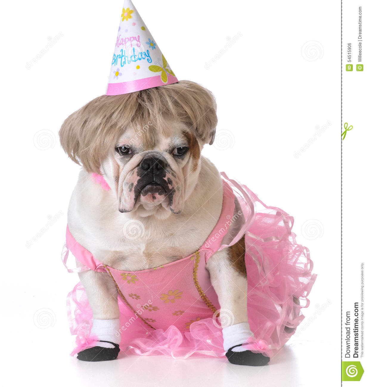 Birthday Dog Stock Photo Image Of Postcard Color Poster