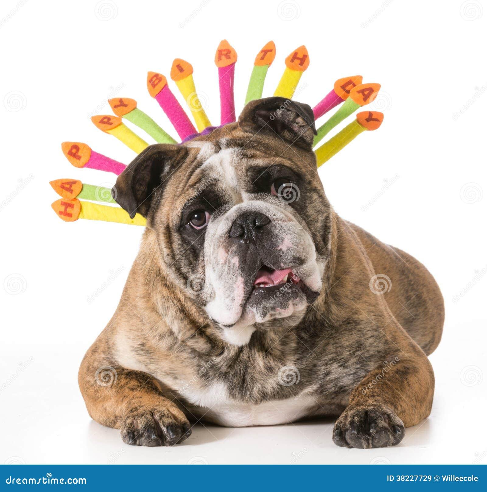 happy birthday dog images free