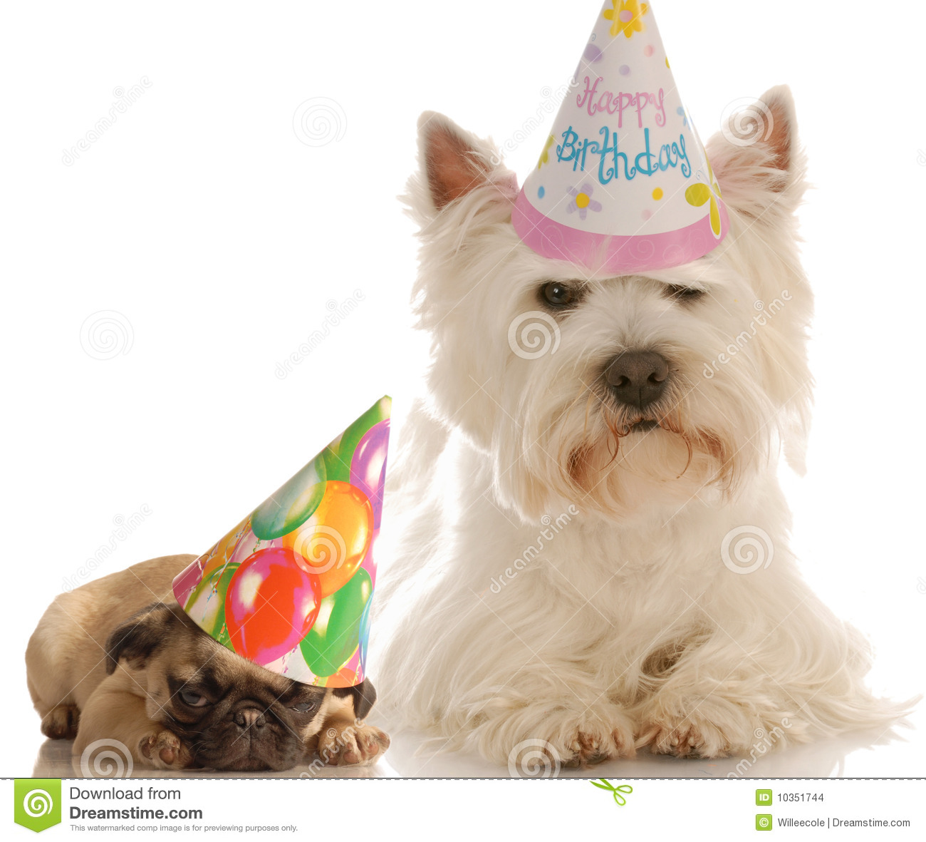 Stock Images Birthday Dogs Image10351744