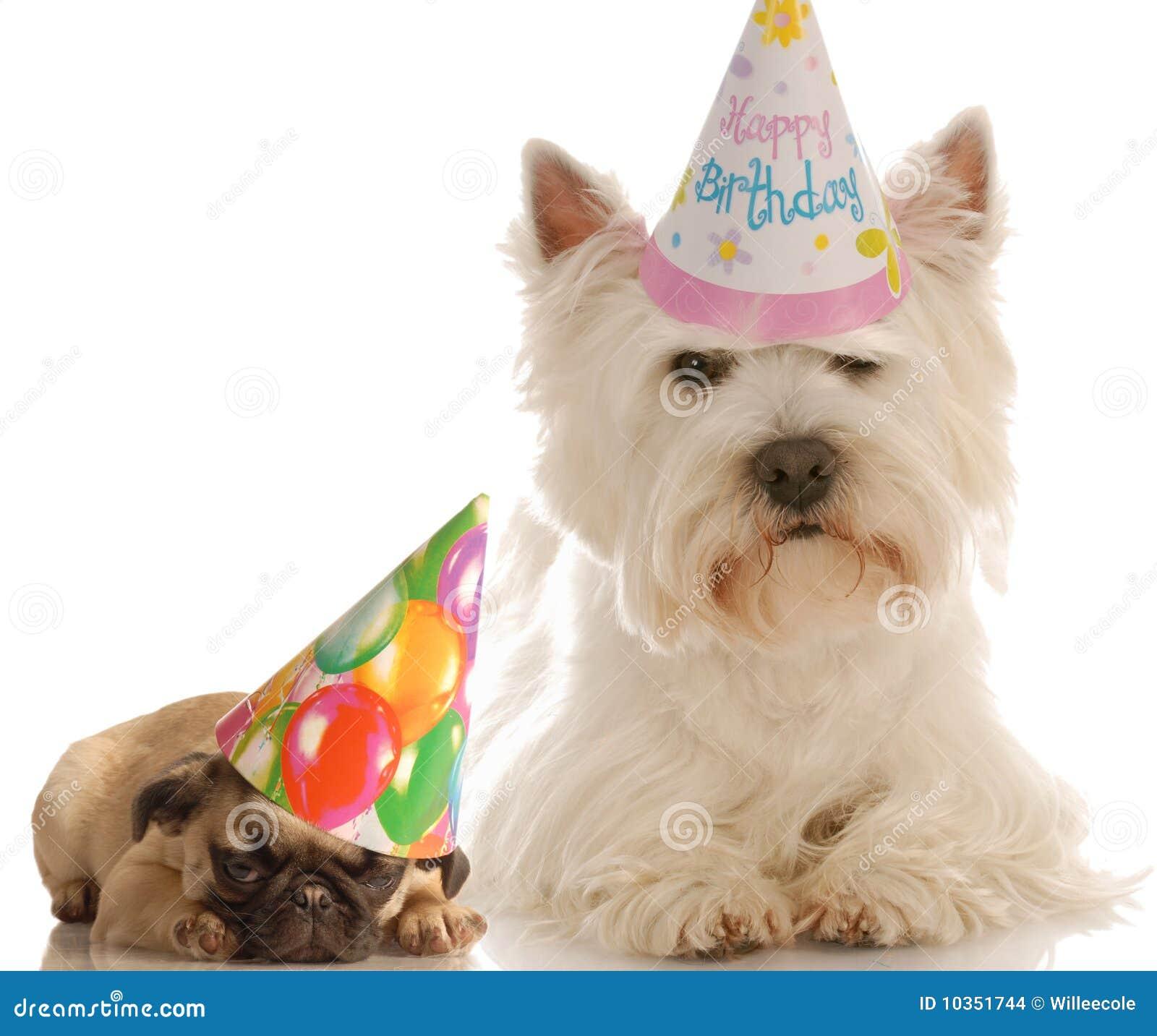 Birthday Dogs Stock Photo Image Of Mammal Fawn Pedigree