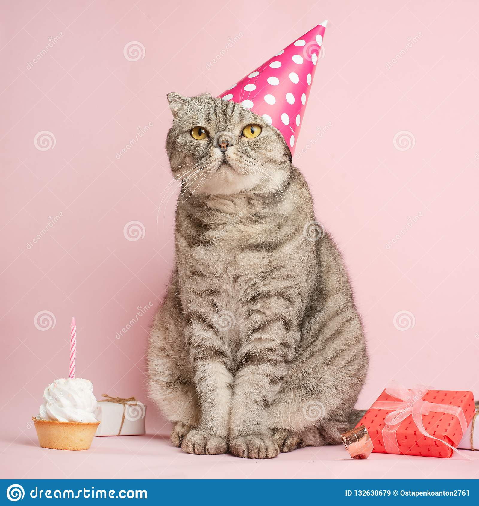 Birthday Greetings From A Cat