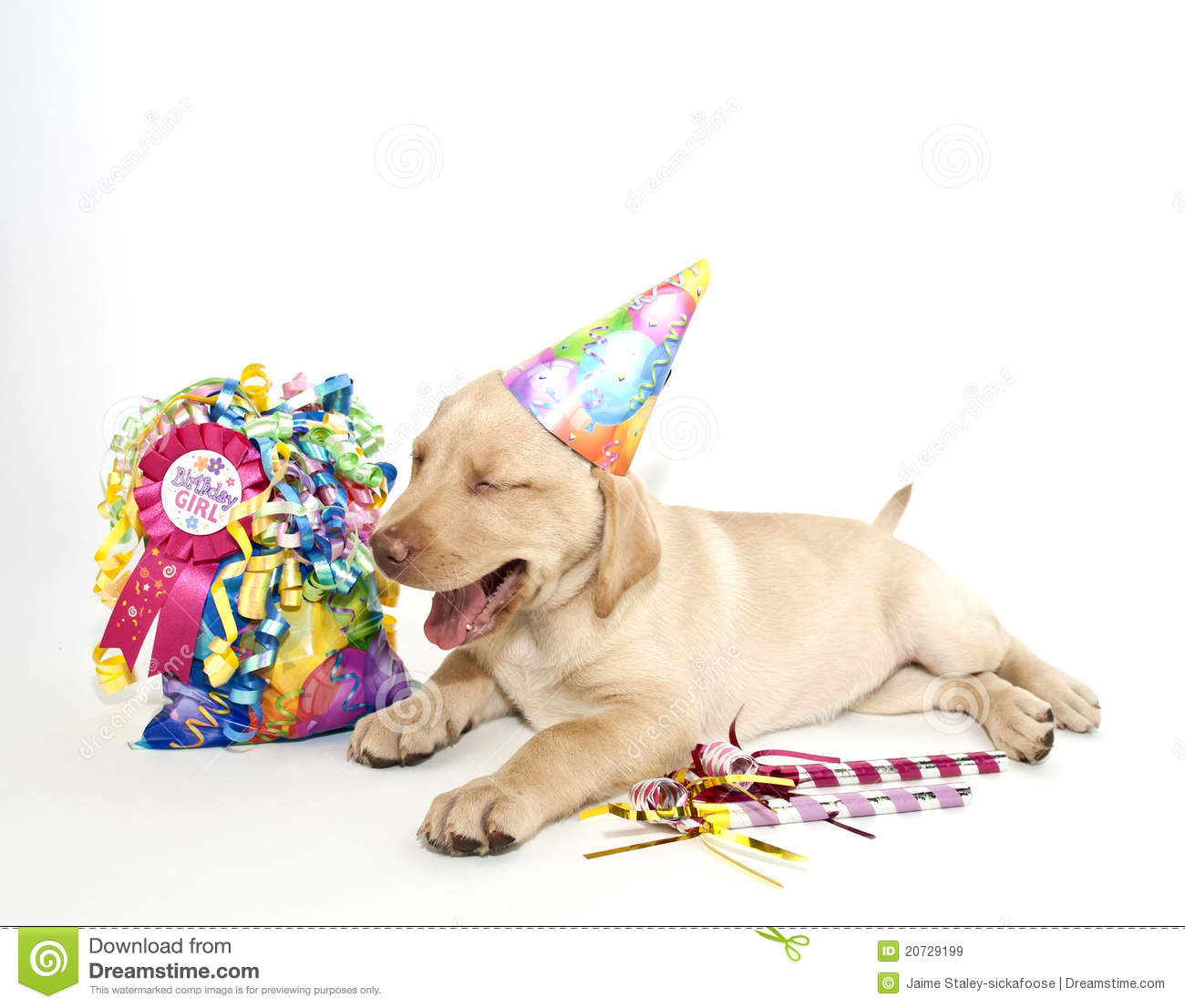 birthday lab Do you have a birthday if so, sign-up for our email list and we'll send you a  free ticket to come see any show within a week of your birthday that's our gift  to.