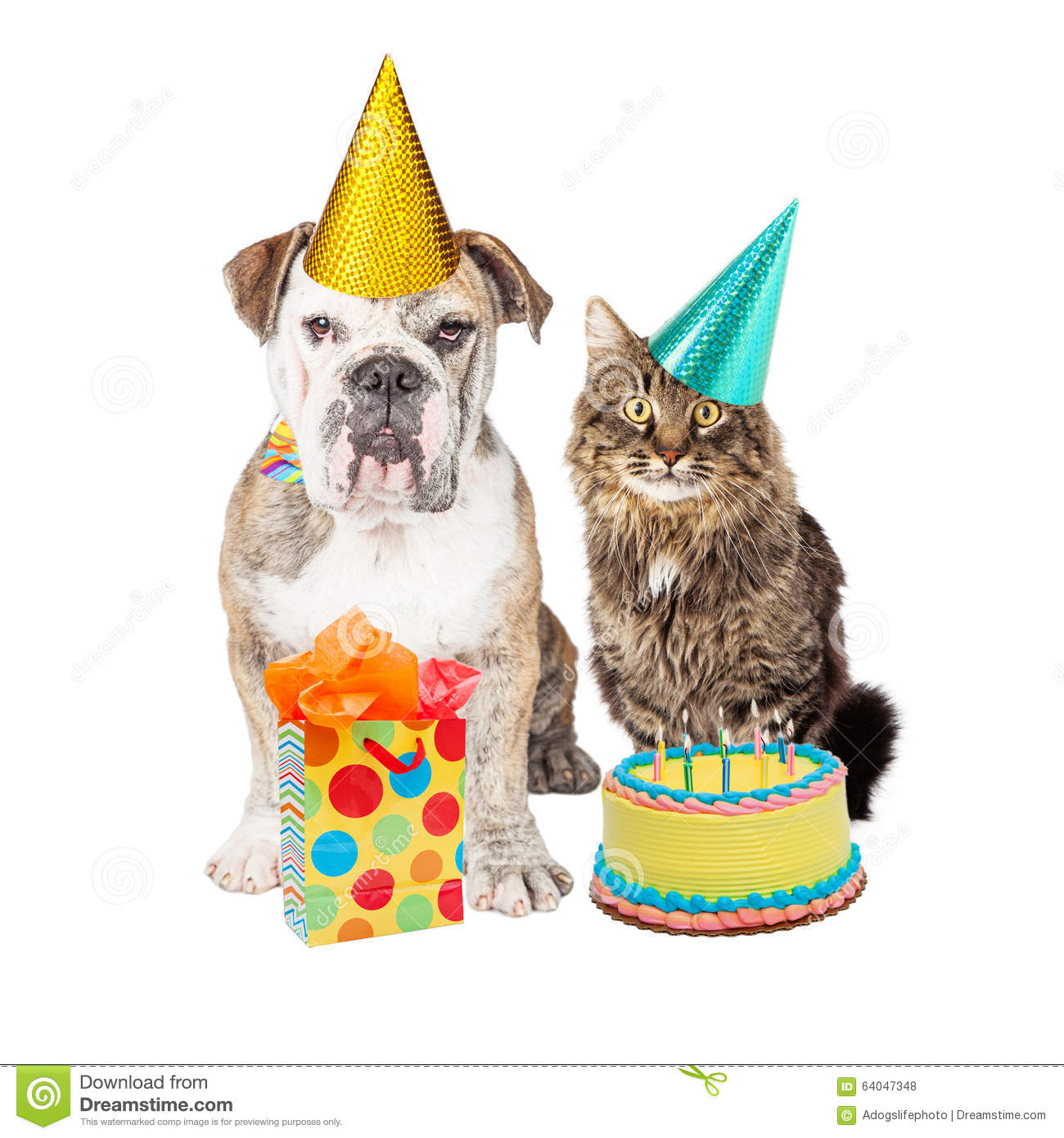 Cute Adult Bulldog Breed Dog And Tabby Cat Wearing Birthday Party Hats With A Cake Present
