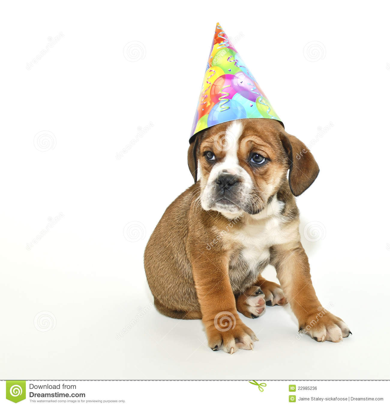 Dog Eating Birthday Cake Video
