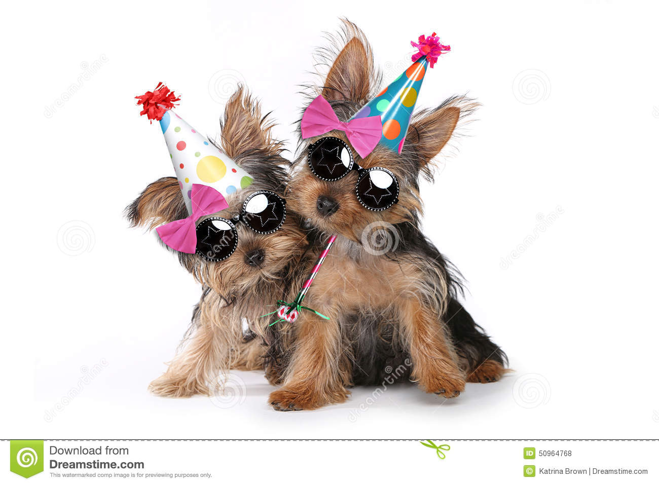 Yorkshire Terrier With Birthday Cake Clipart