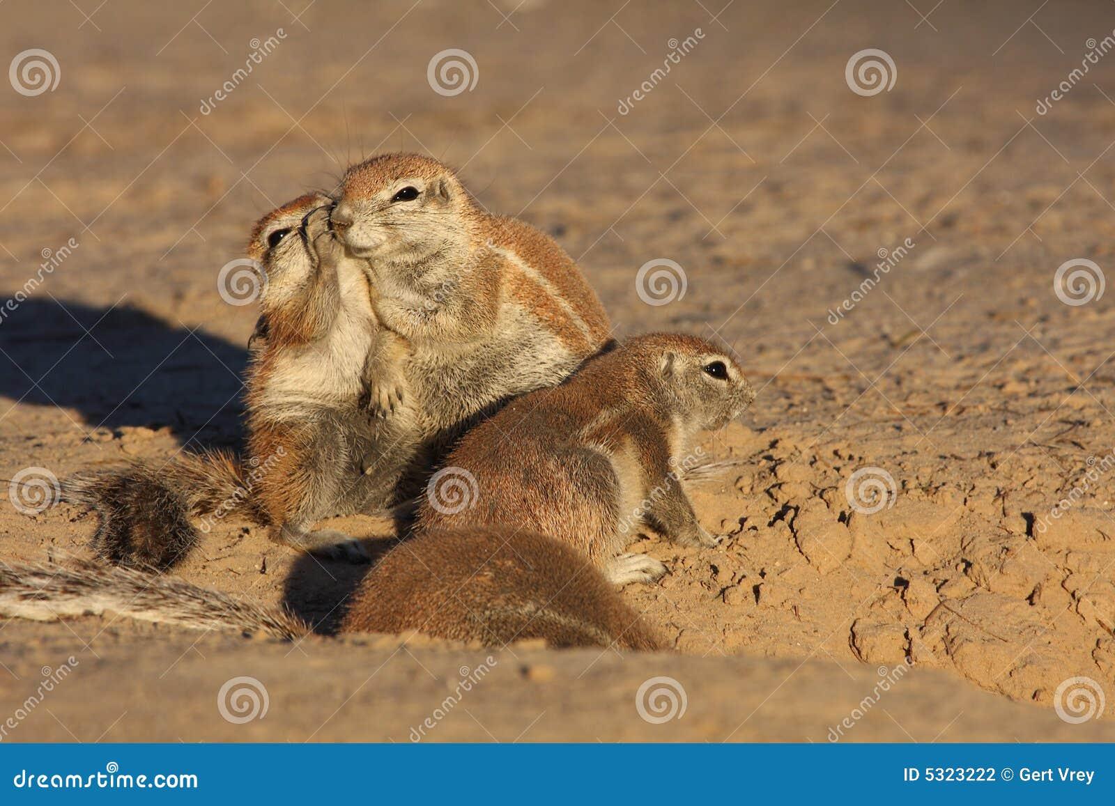 Download Bisbiglio fotografia stock. Immagine di cute, animale - 5323222