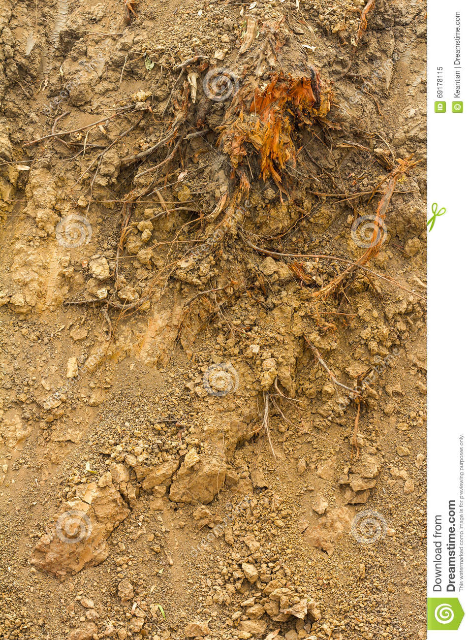 Bishop roots in the ground digging stock image image for Digging ground dream meaning