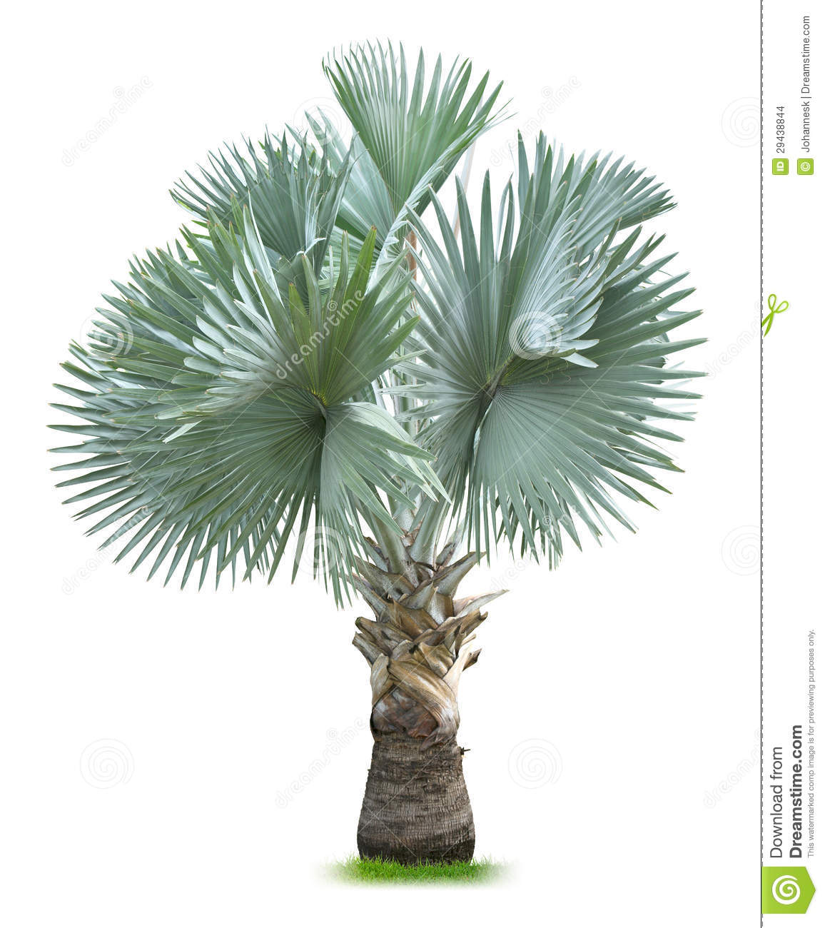 how to sell palm trees
