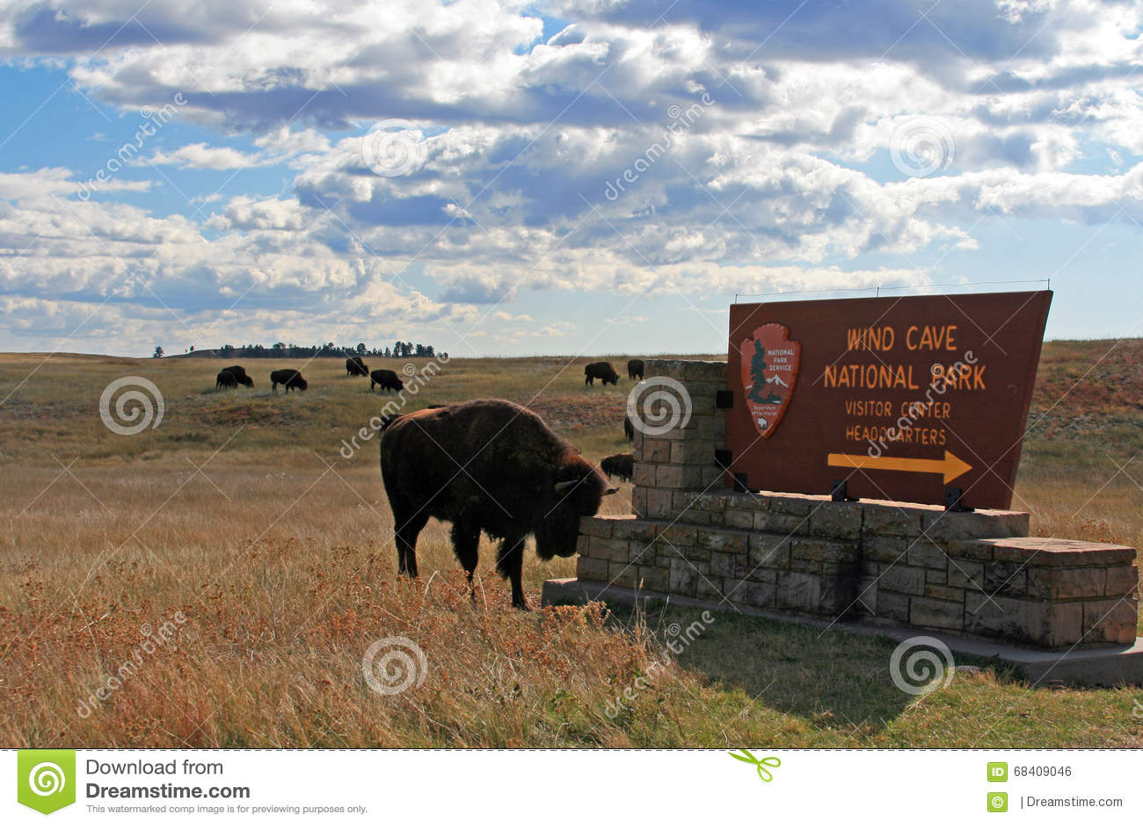 Bison Buffalo, der Kopf auf dem Wind-Höhlen-Nationalpark verkratzt, unterzeichnen herein das Black Hills von South Dakota USA