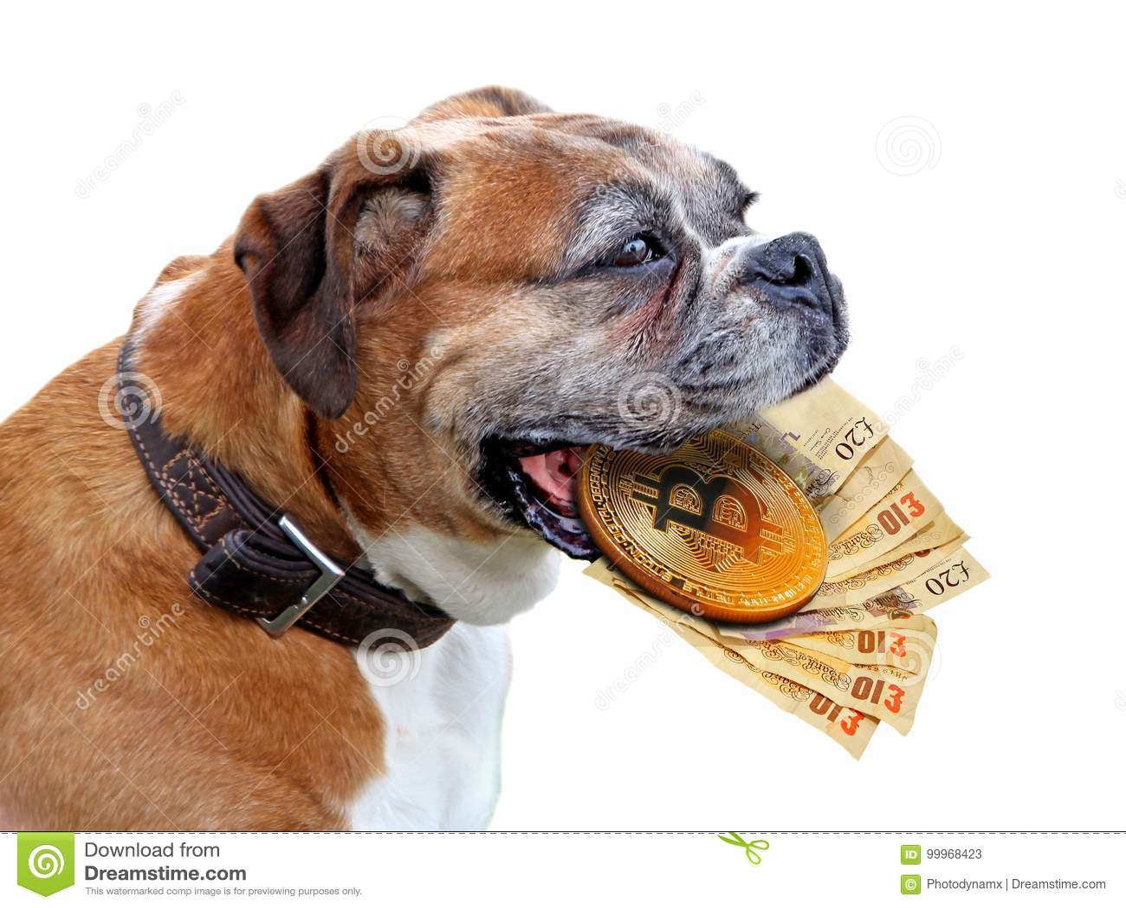 Bitcoins pictures of dogs antonio milicia bettinger