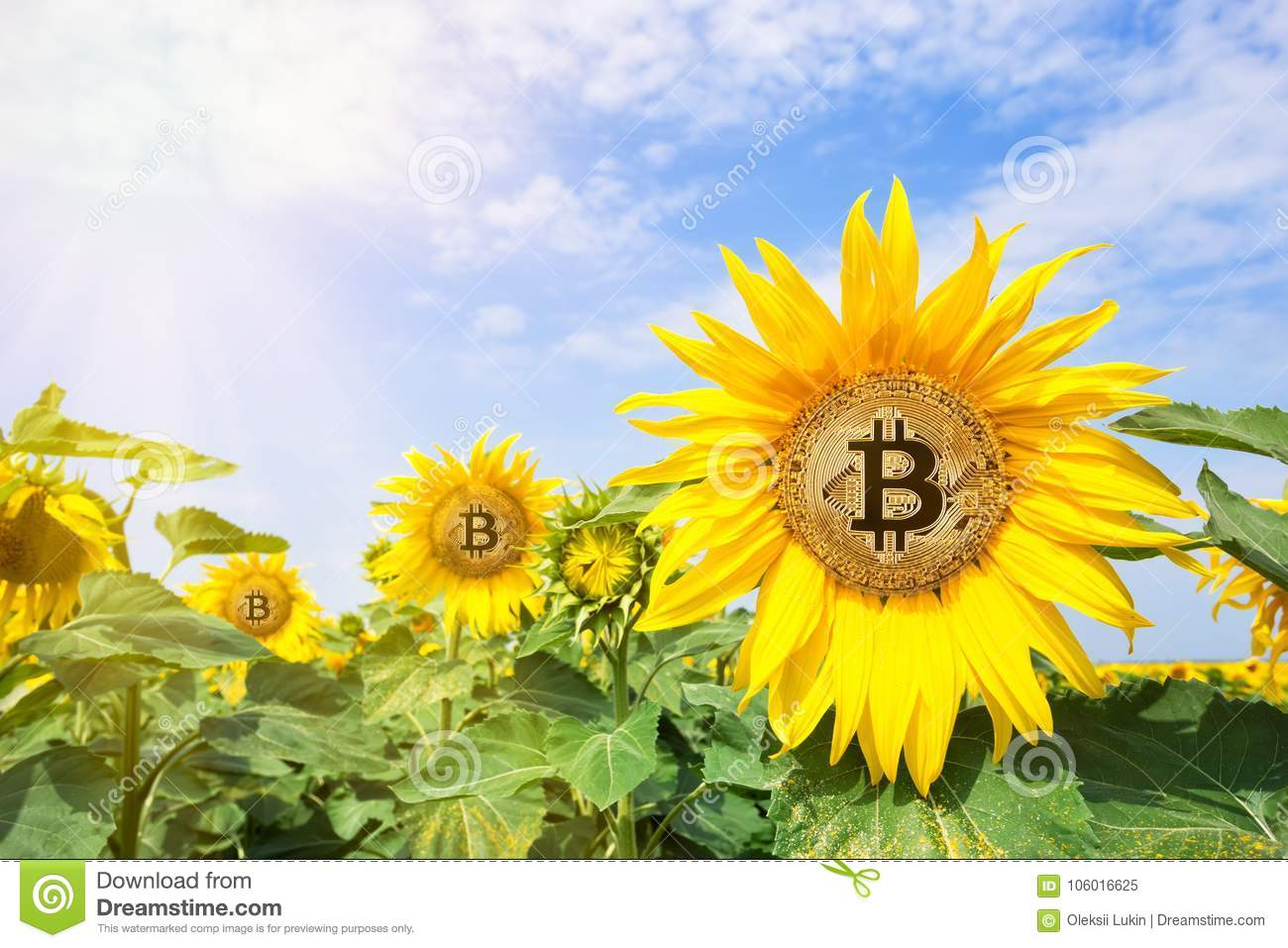 Bitcoins images of flowers 560bet betting tips