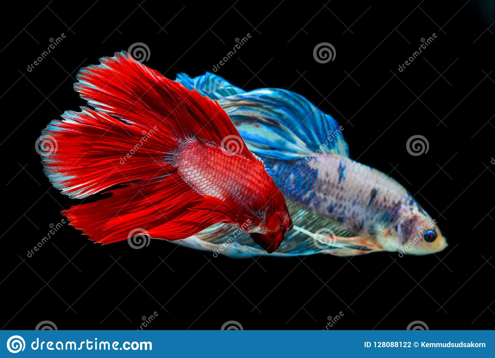Bite fish with beautiful colors