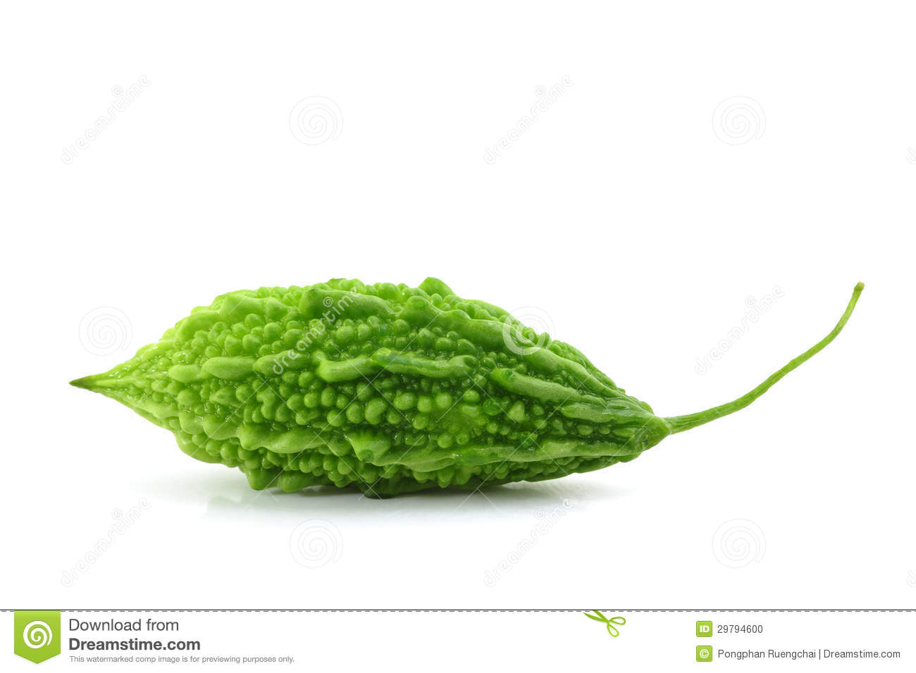 Bitter Gourd Stock Photo - Image: 29794600
