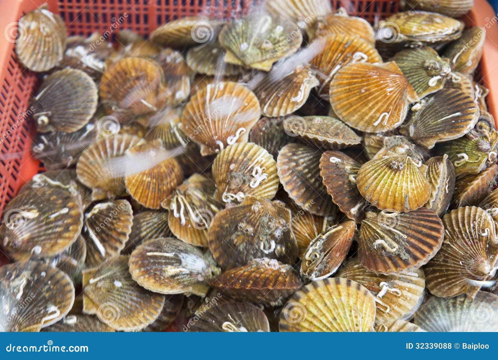 Freshwater fish korea - Bivalvia For Sale At Fish Market South Korea