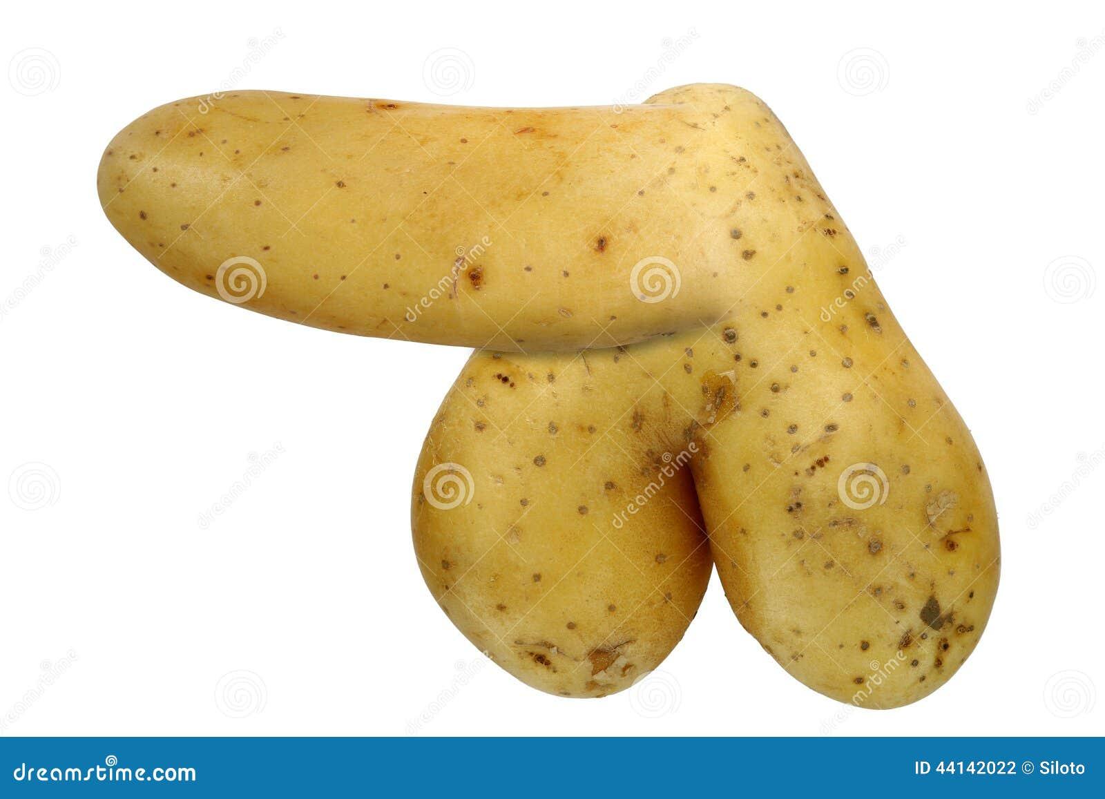 macro penis