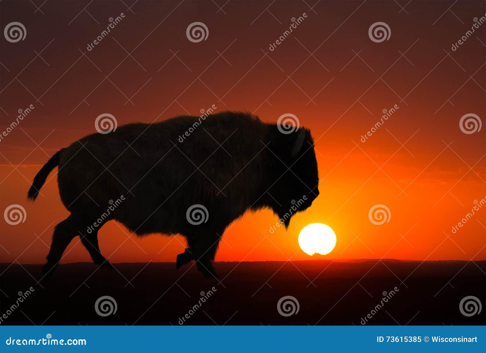 Bizon, żubr, wschód słońca, zmierzch, tło