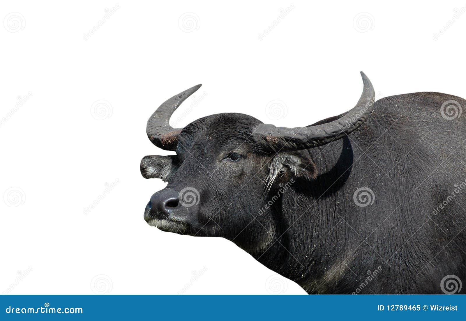 Bizon odizolowywający wodny biel