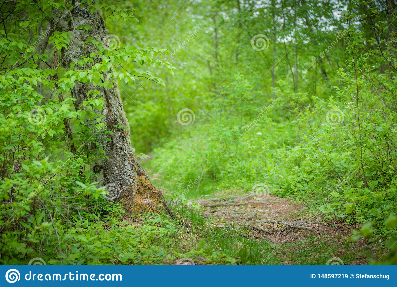 Björk Forest Pathway - ny vårgräsplan