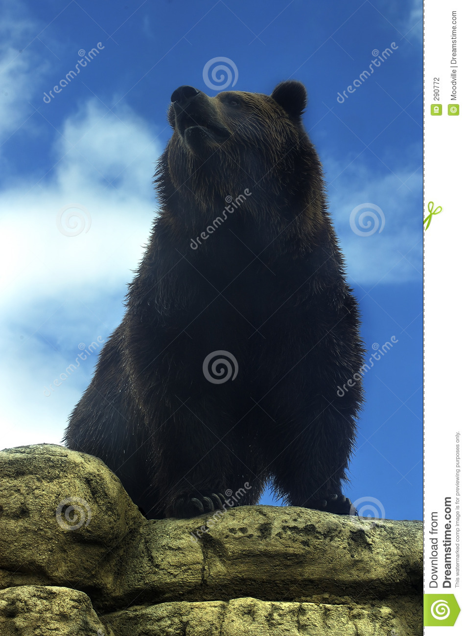 Björngrizzly