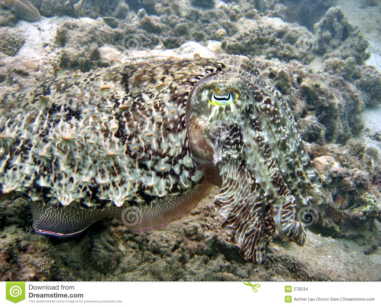 Bläckfiskförklädnad