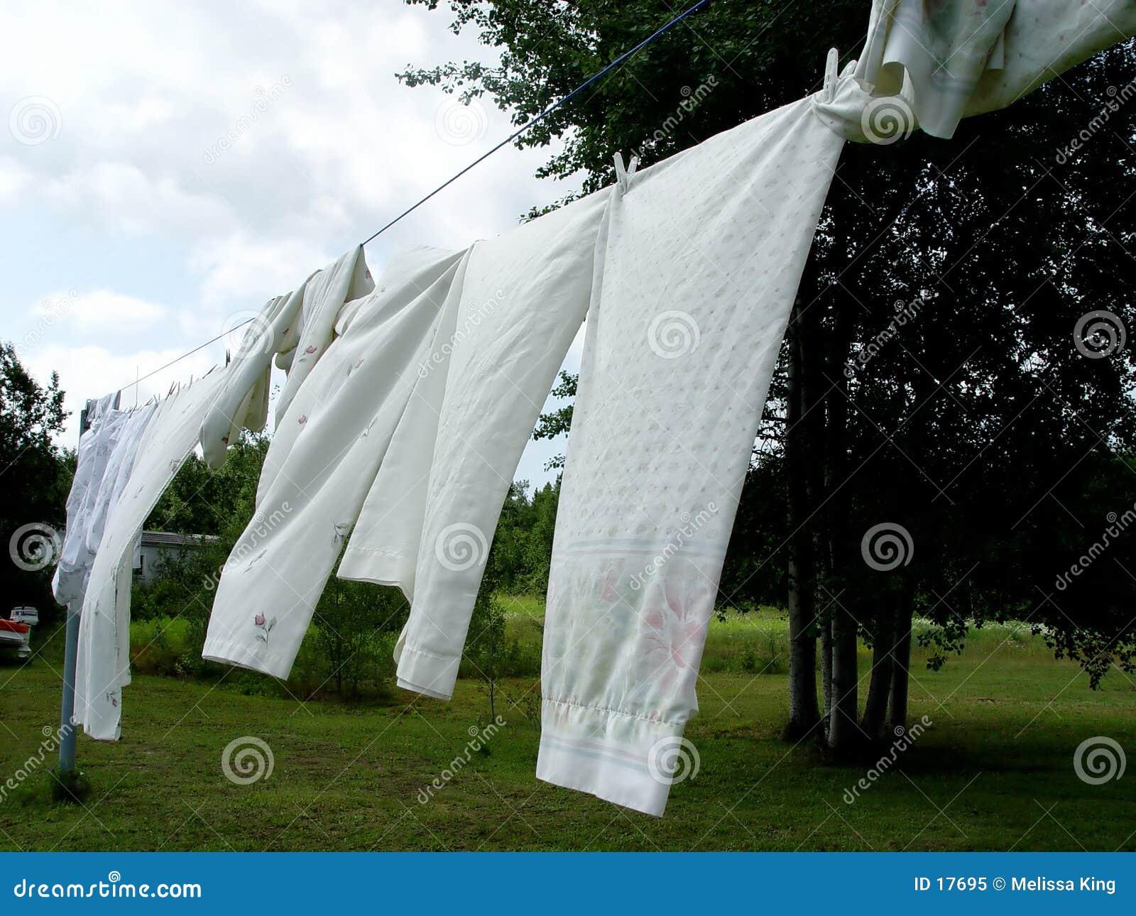 Blätter auf der Kleidungzeile