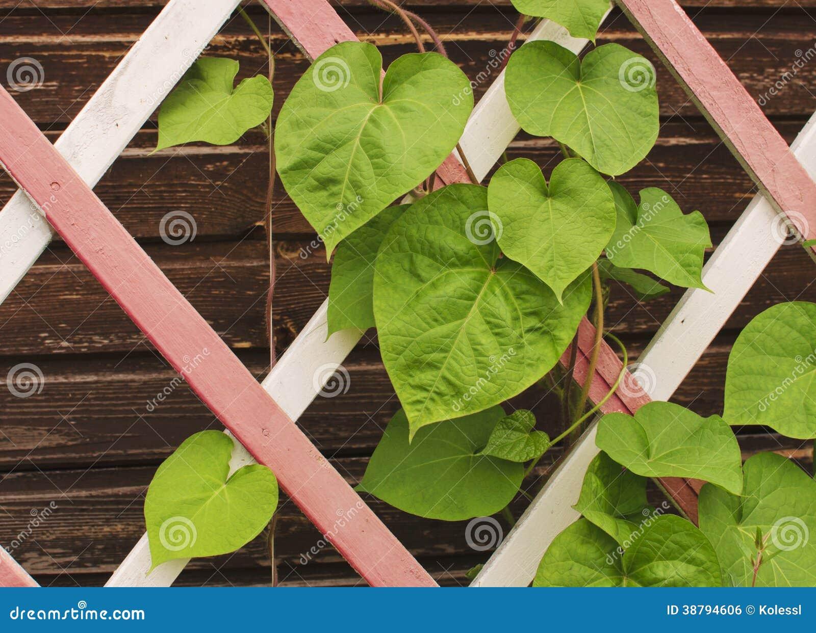 Blätter auf einem hölzernen Gitter