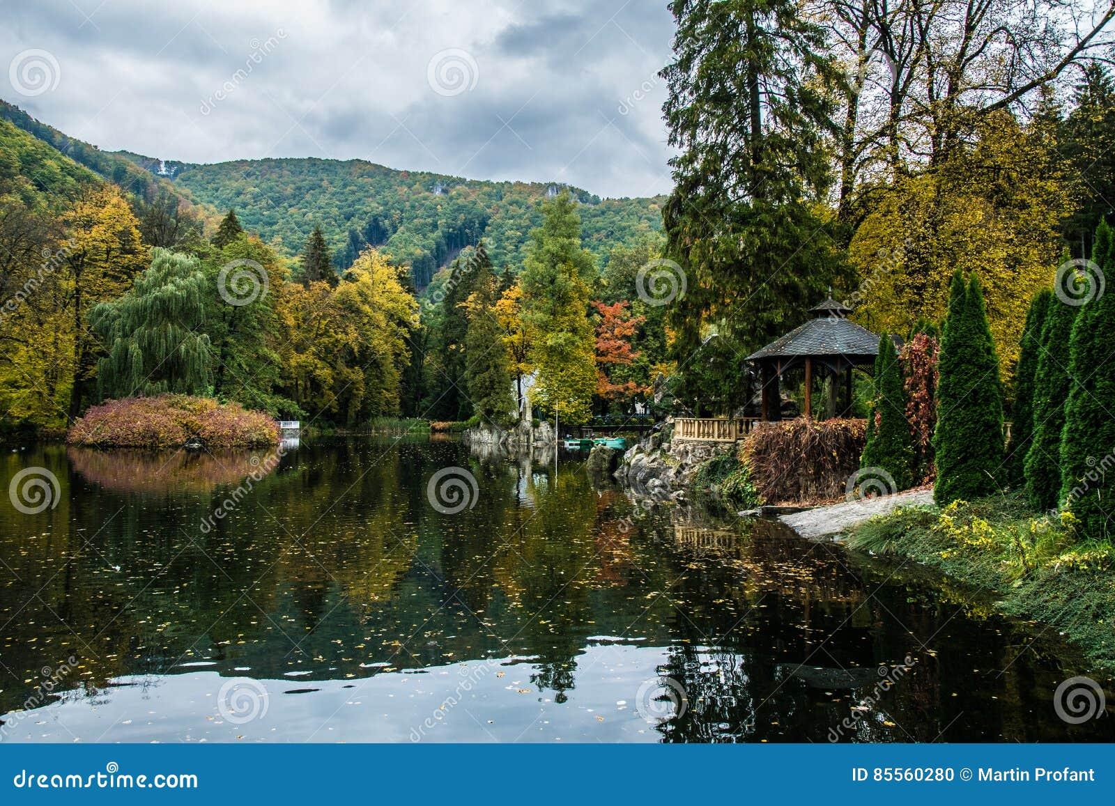 Blätter auf einem See