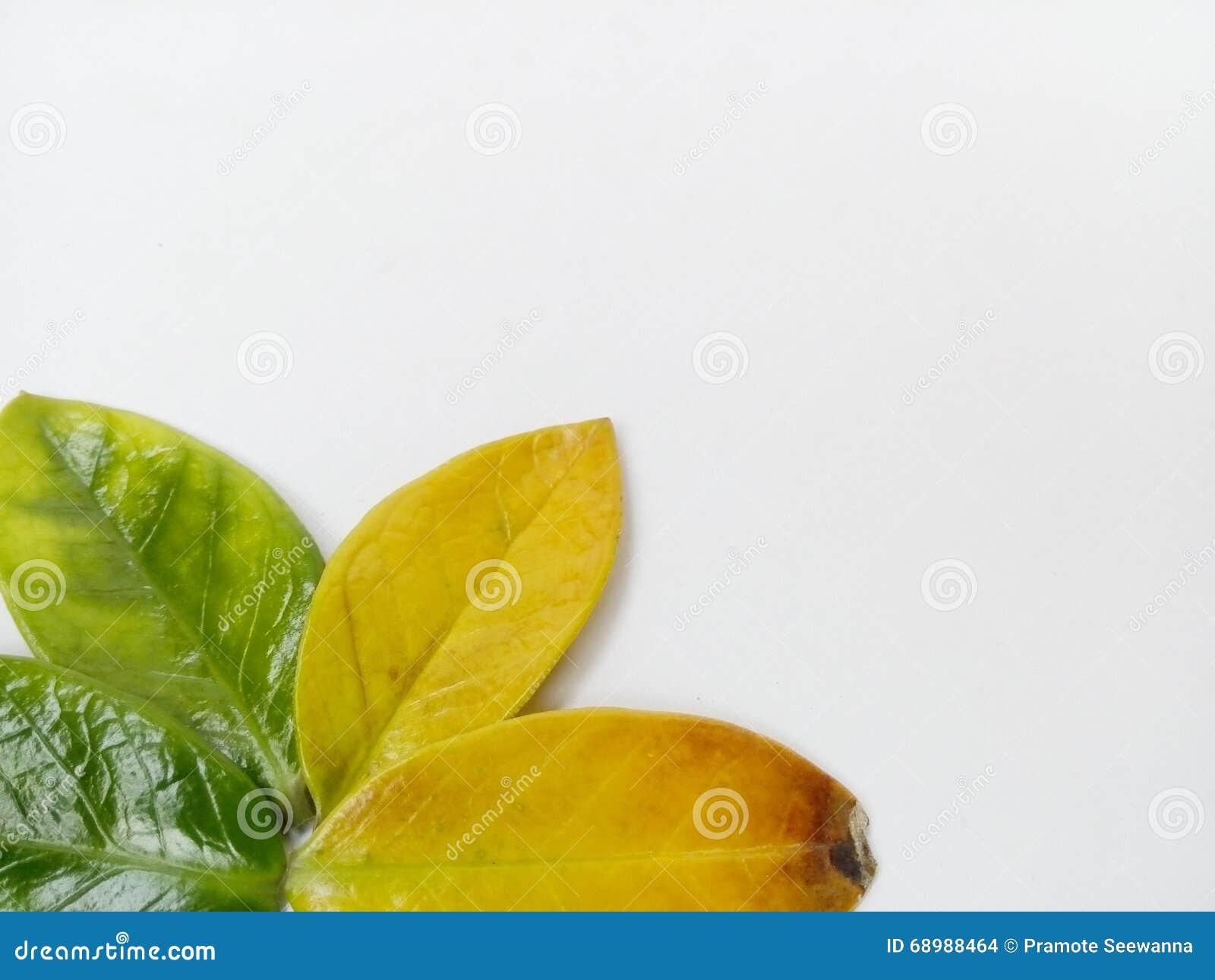 Blätter auf einem weißen Hintergrund