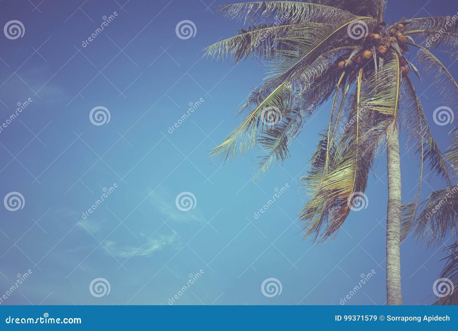 Blätter der Kokosnuss auf einem Hintergrund des blauen Himmels