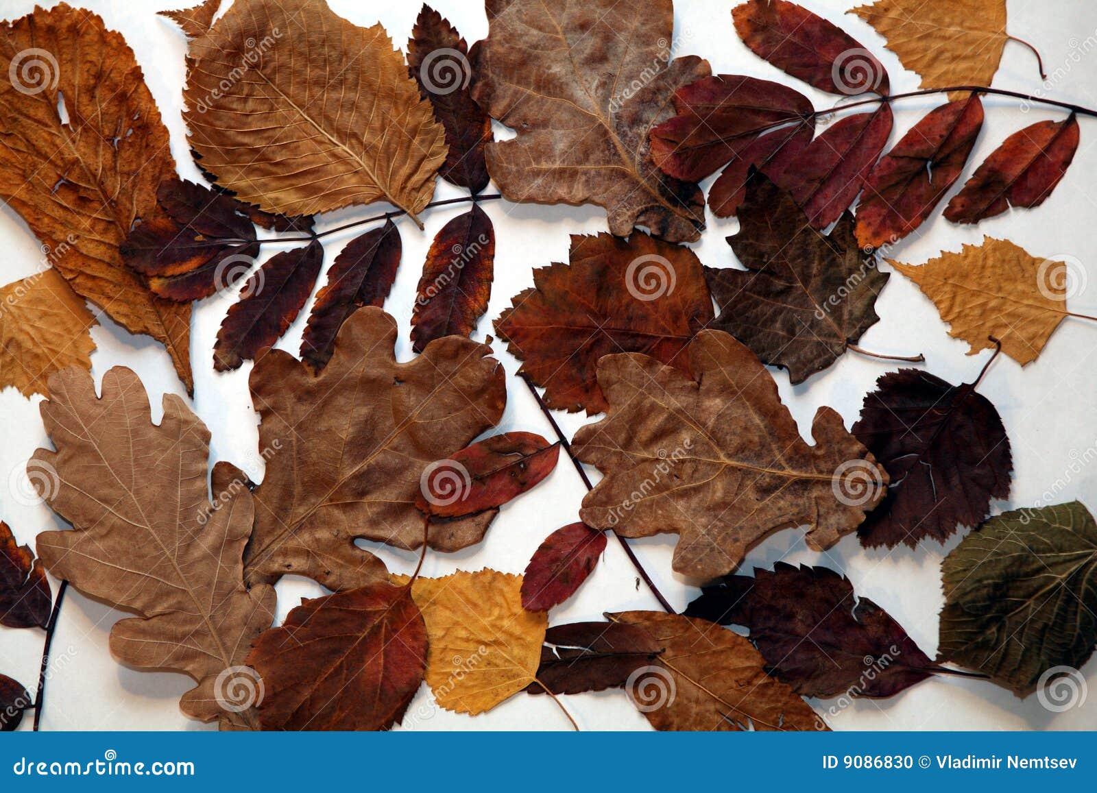 Blätter des Herbstes