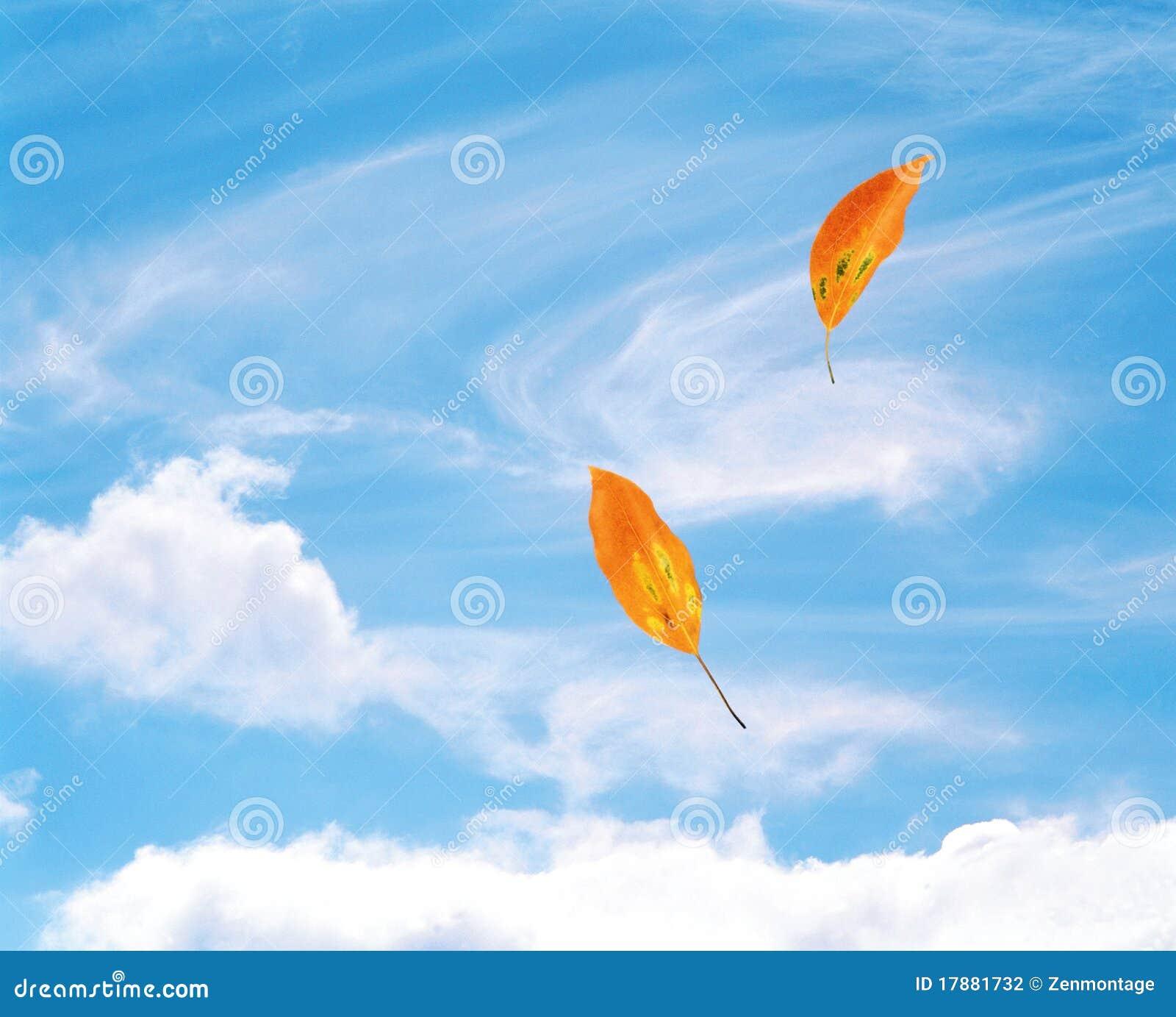 Blätter, die im Wind durchbrennen